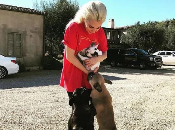 Lady Gaga's dog walker shot : two of her French bulldogs stolen