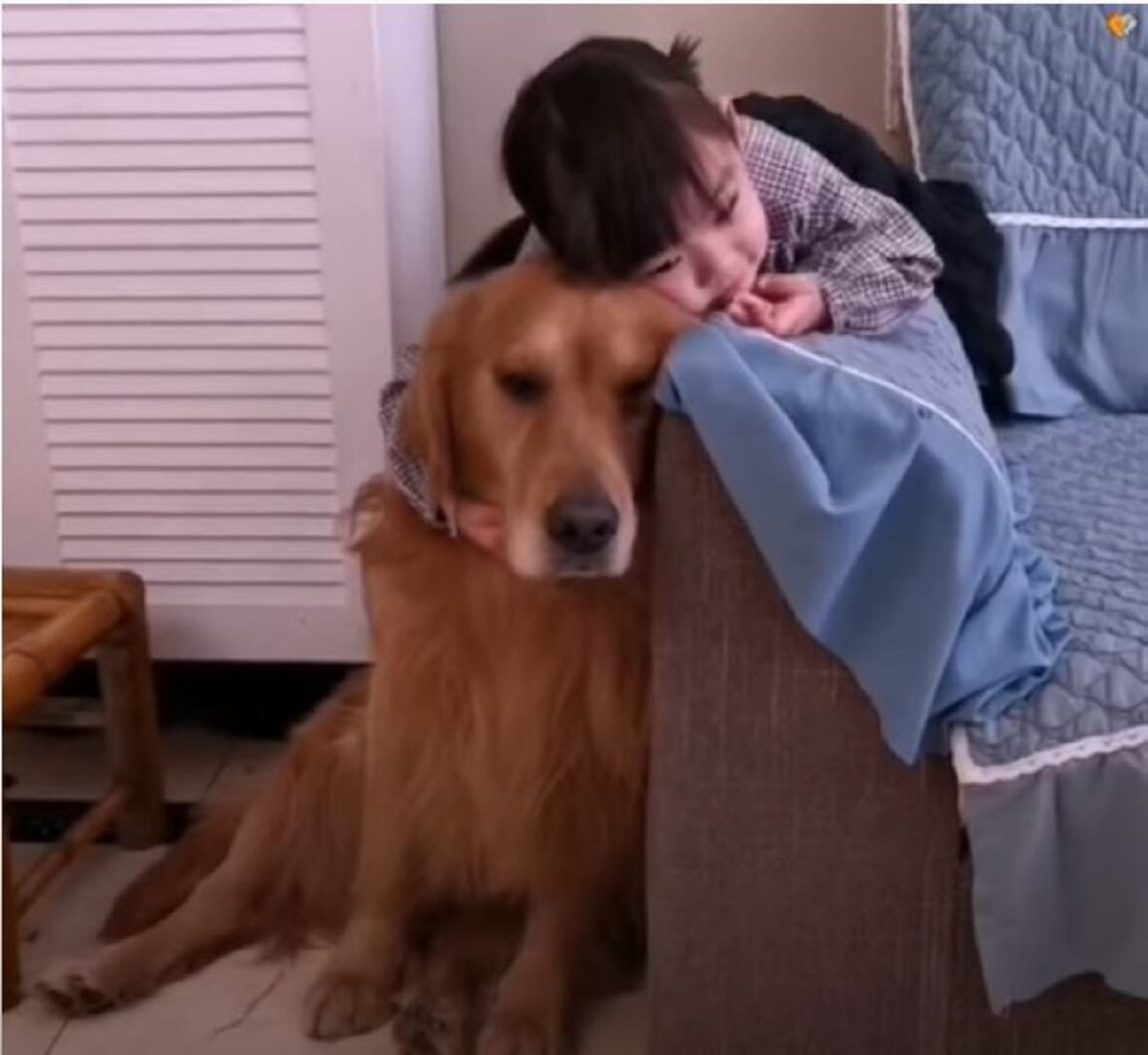 TheGolden Retriever puppy loves his little sister madly