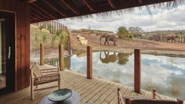 First Ever Safari Lodges Where Elephants Roam Next To Room