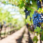 California winery offers a dream job to anyone who loves wine