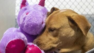 Dog steals a purple unicorn from a store until he receives it as a gift