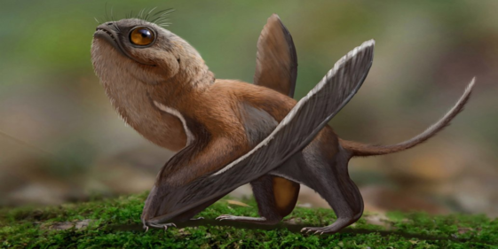 Scientist Compares Newly Discovered Dinosaur to Star Wars Porg