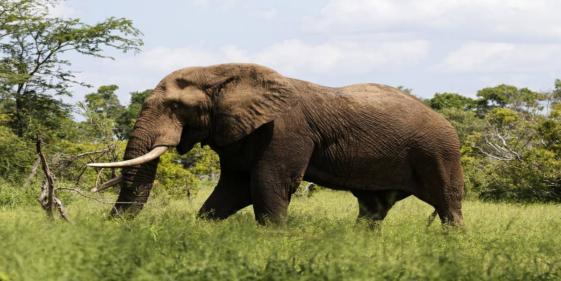 Suspected elephant poacher killed by herd of elephants in Africa