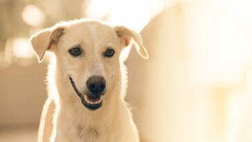 New infectious coronavirus from dogs detected in Malaysia