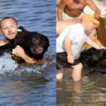Man saved 375-pound black bear from drowning