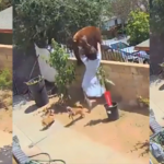 Teenage girl fights bear to protect her dogs from animal