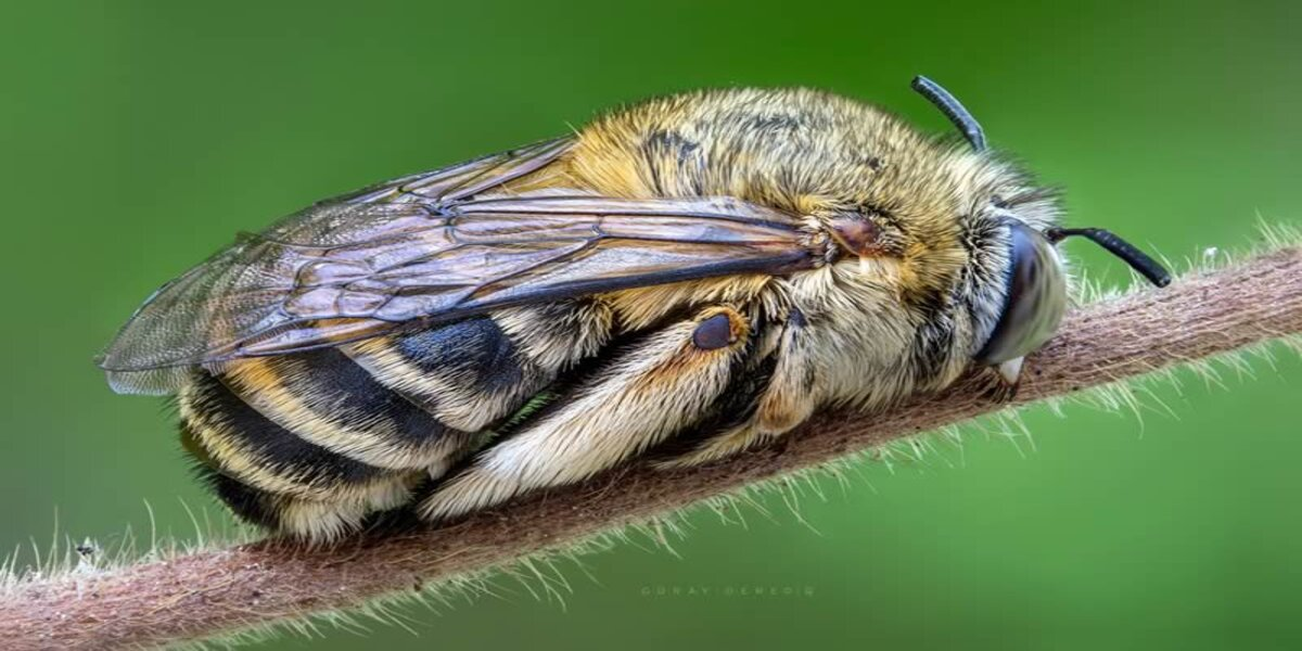 Have you ever wondered if insects sleep?