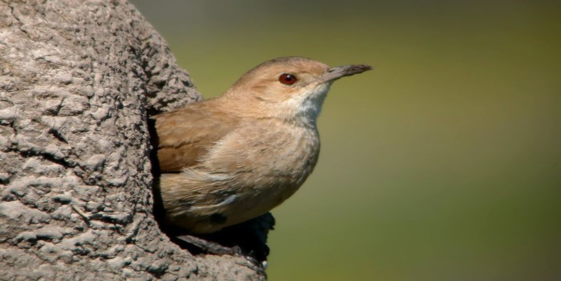 Nature making architecture: the constructions of the Hornero bird