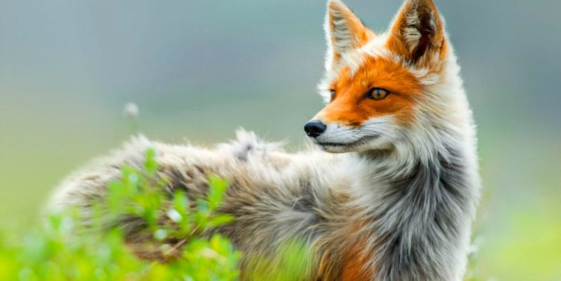 The 10 most beautiful animals in the world