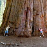 The giant sequoia forest: home of Hyperion