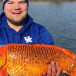 Officials warn to stop throwing goldfish into lakes. 'They grow bigger than you think'