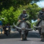 Police unit that rides buffaloes to patrol the Amazon