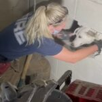 Dog rescued after being trapped between two walls for five days