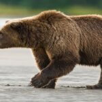 Man rescued after days of wrestling with grizzly bear in Alaskan cabin
