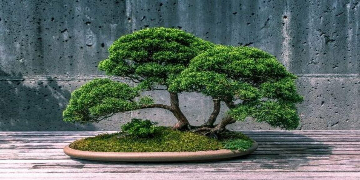 Bonsai: know the history and meaning of these miniature trees