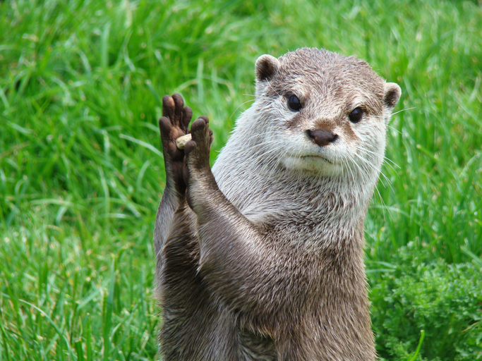 Otters have a favorite stone that they keep for their entire life.