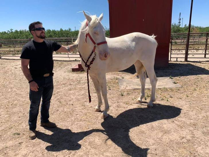 River, the horse that was abandoned like garbage