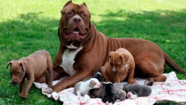 What is the origin of the Pit bull?