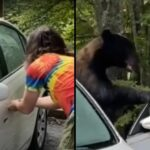 Man risks death while trying to get rid of a bear that had broken into his car