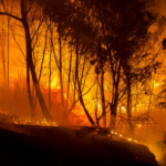 Algeria: Fires kill four and injure three in Kabylia