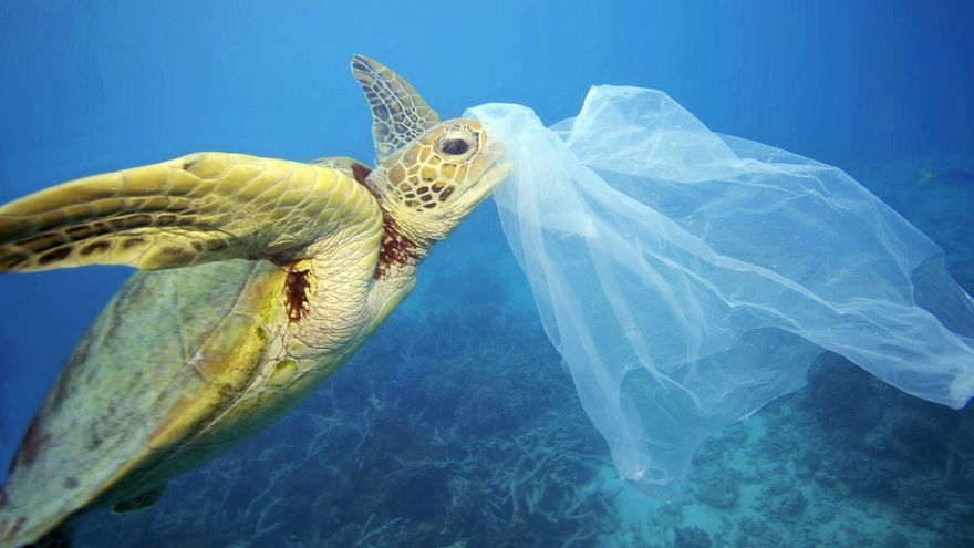 Sea of plastics: how much plastic is in the sea and oceans