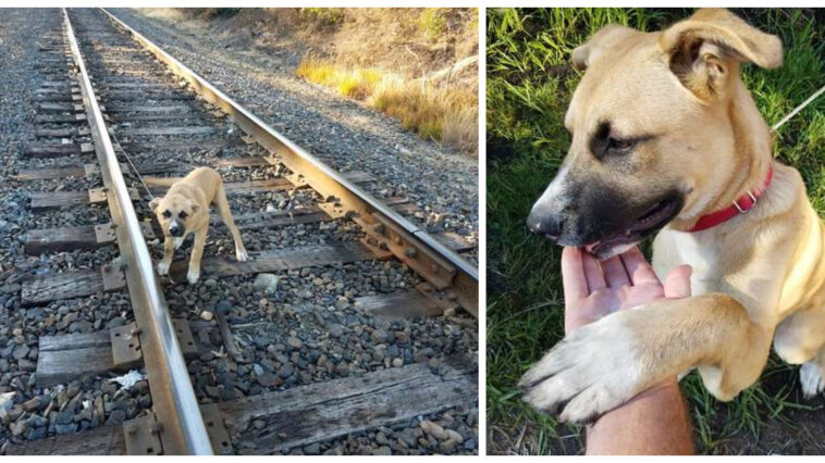 The dog is rescued from the rails at the last second