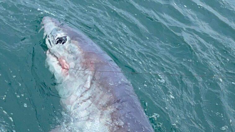 "Fisherman catches record-breaking six-foot ""monster"" shark off Devon coast"