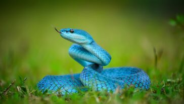 There are approximately 3,000 species of snakes in the world