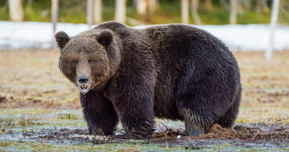 Hunter mauled by grizzly bear in Alaska