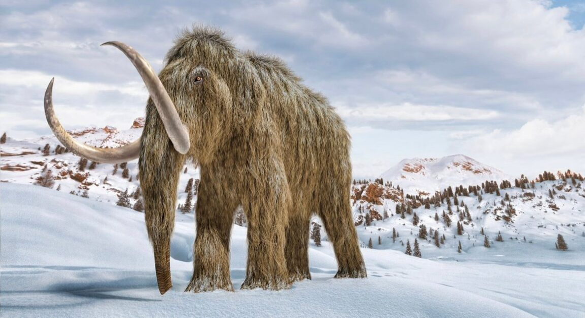 Genetics company wants to revive the woolly mammoth