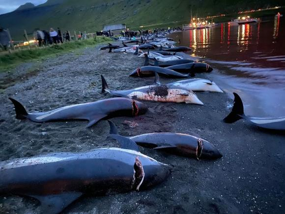 Horrifying footage shows children watching nearly 1,500 dolphins being slaughtered in Faroe Islands