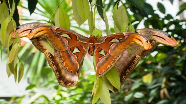 Butterfly or snake: the new optical illusion taking Twitter by storm